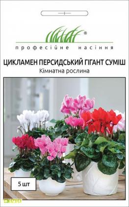Семена цикламена Персидский крупноцветковый, 5шт, Hem, Голландия, Професійне насіння, до 2020 фото