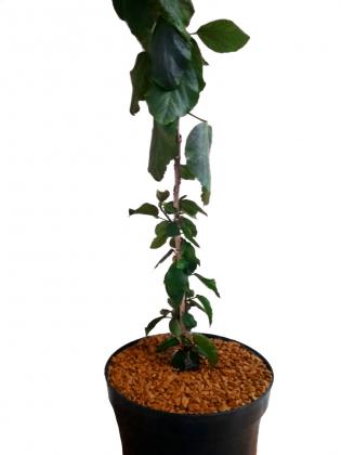 Декоративные камни для цветов, коричневые, в зип пакете, 1кг фото
