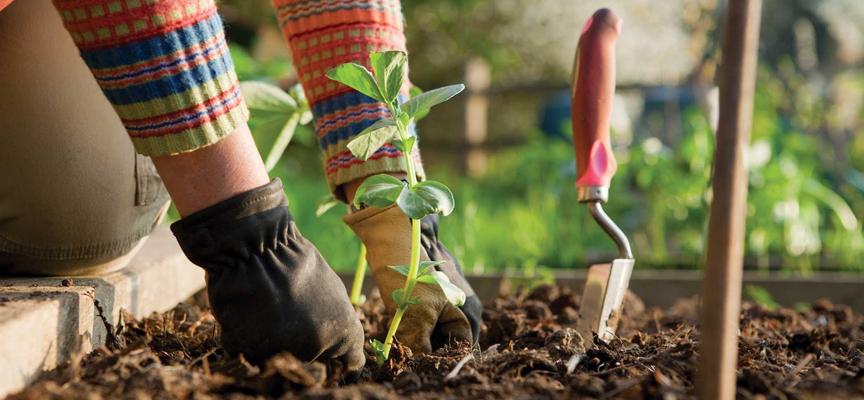 Сад огород почва