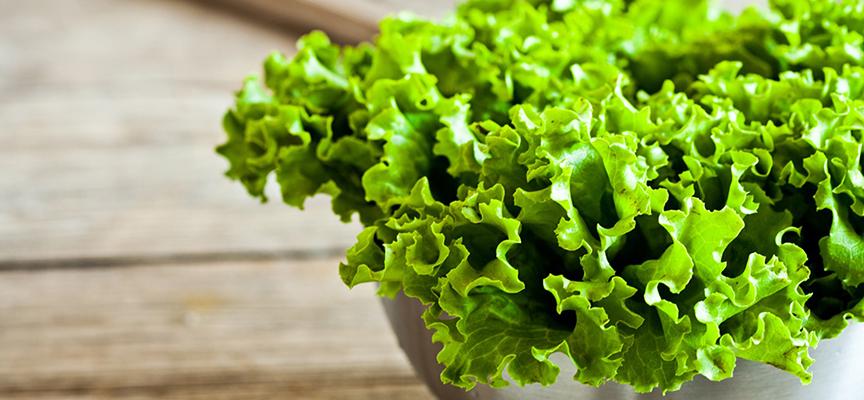 Як виростити салат на підвіконні в квартирі  - інтернет магазин ... 1e8975f7700cb