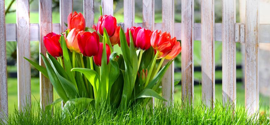 Правильно сажаем тюльпаны — інтернет-магазин товарів для саду та ... 0fadcc9aba39a