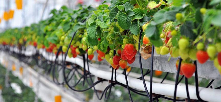 Оборудование для выращивания ягод 18