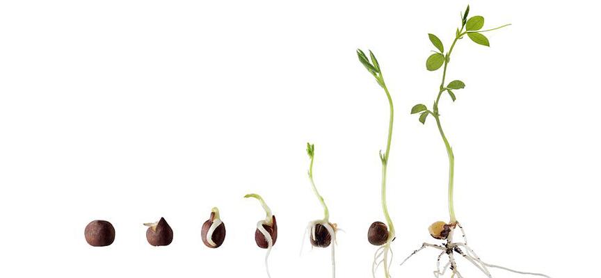 7 вопросов о семенах