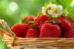 Клубника – от семечка до урожая. Часть 2. Посев семян