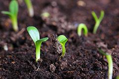 Стимулируем прорастание семян