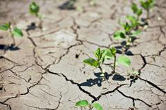 Боремся с засухой