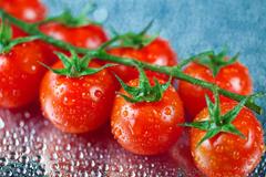 Фитофтороз. Здоровье растений - в ваших руках