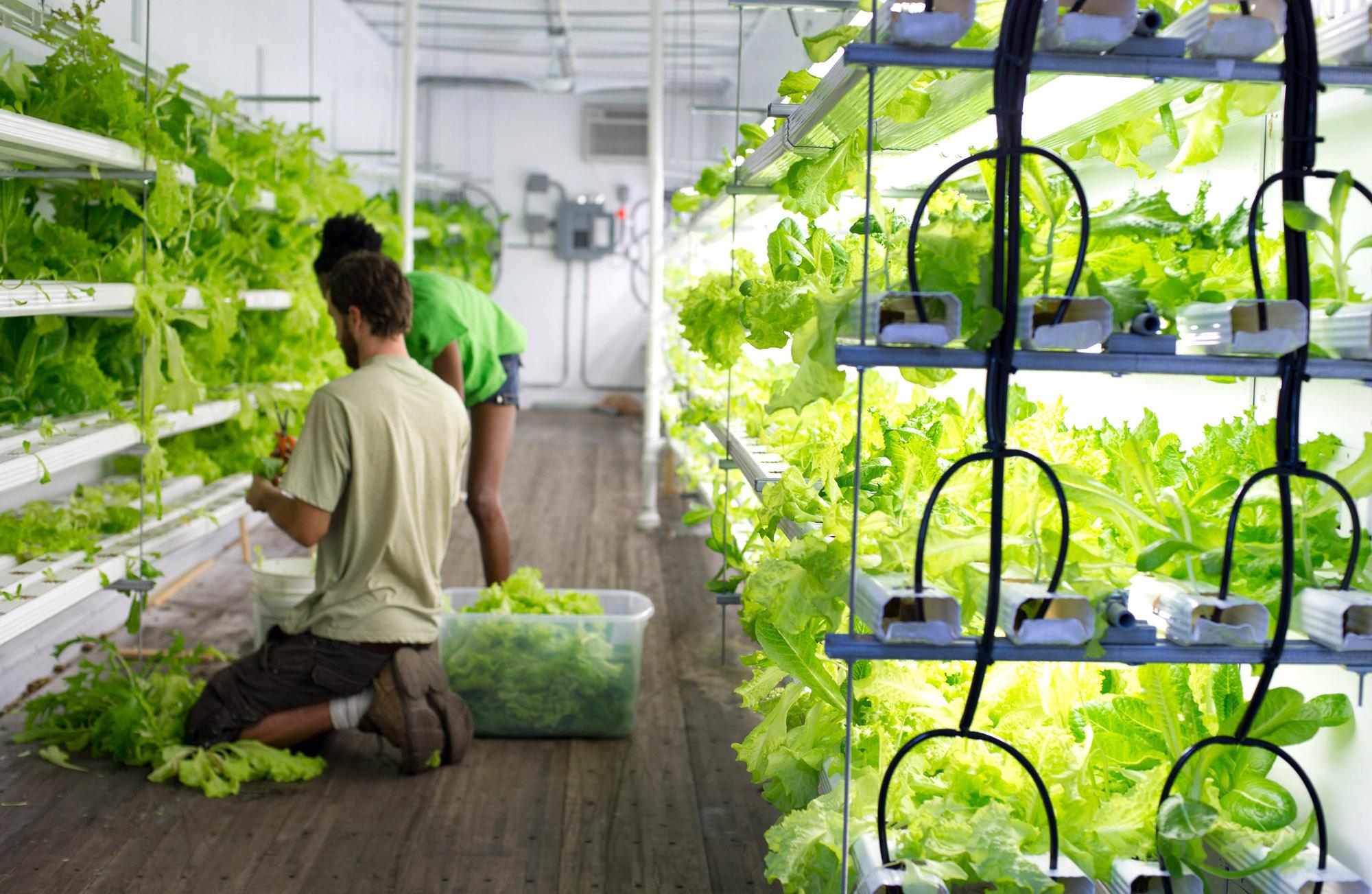 Инновационные теплицы для выращивания овощей 98