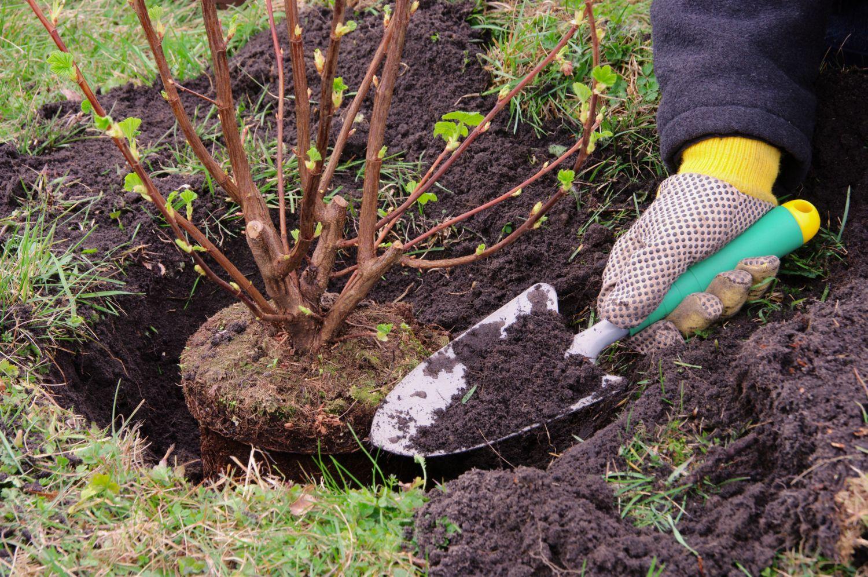 Когда сажают кустарники в саду 9