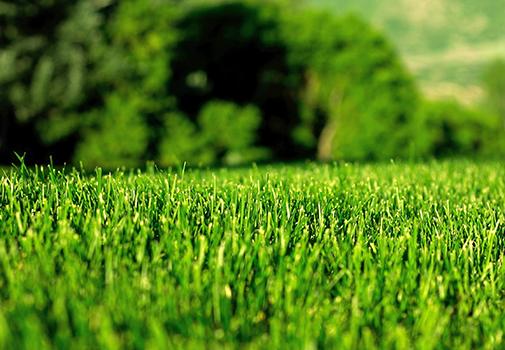 Идеальный дерн - без проблем! «Биологические» методы решения проблем газона