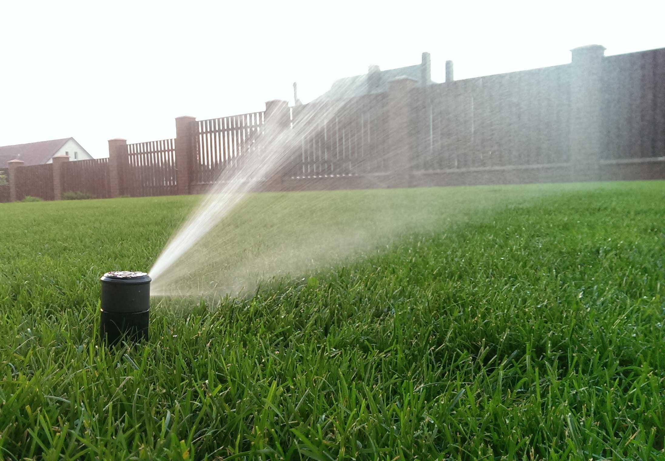 Как правильно организовать полив газона?