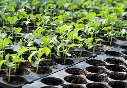 Рассада без химии: как выбрать органическое удобрение для огорода?