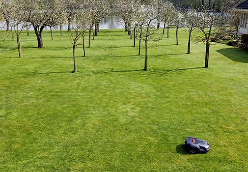 Плодовый сад на газоне. Как совместить приятное и полезное?
