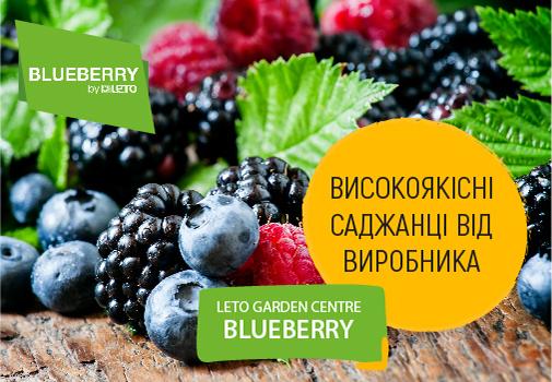 Садовый центр Blueberry by Leto: здоровые саженцы, гарантированный урожай