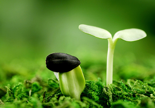 ТОП-5 стимуляторов всхожести семян