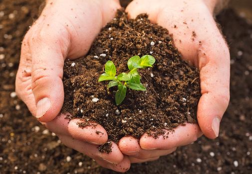 Удобрения для разных типов почв (видео)