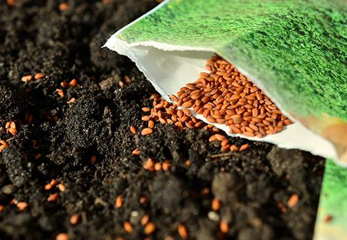 Зима – лучшее время для того, чтобы купить семена. Как правильно выбирать и хранить семена овощей и цветов?