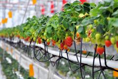 Выращивание растений без грунта