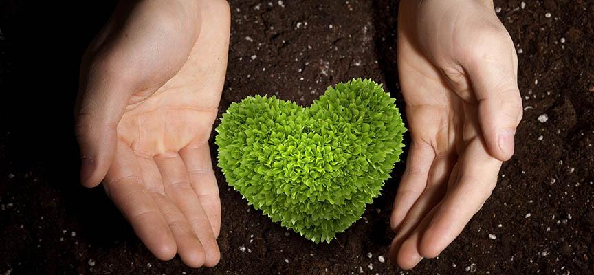 Как получить идеальный результат при использовании биогумуса?