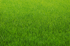 Благополучие почвы – залог здоровья газона