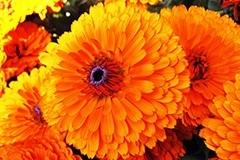 Подзимний посев цветов