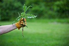 Готовим участок к посеву. Как применить гербициды правильно