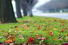 Идеальный газон. Осенние решения весенних проблем
