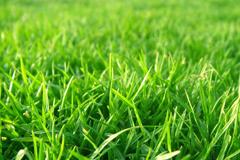 Как получить идеальный газон
