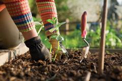 Как правильно посадить рассаду
