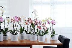 Как сделать орхидею «многоразовым» растением?