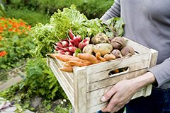 Как сохранить урожай. Лучшие способы хранения овощей и фруктов