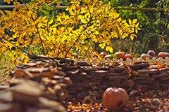 Комплекс осенних мероприятий по борьбе с вредителями и болезнями сада