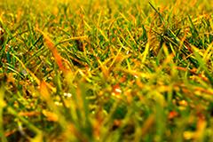Консервация газона на зиму. Выбираем эффективные препараты