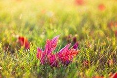 Между летом и зимой. Осенний газон. На что обратить внимание (видео)
