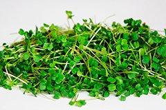 Микрозелень – новый тренд комнатного овощеводства