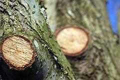 Обрезка и формирование деревьев (видео)