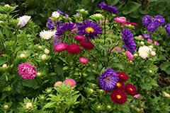 Как подкармливать и удобрять цветы осенью