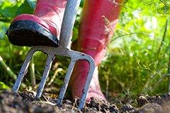 Плюсы и минусы обработки почвы под зиму. Перекопка почвы. Коренное улучшение