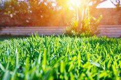 Подбираем удобрения для газона
