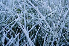Правильно готовим газон к зиме