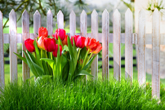 Правильно сажаем тюльпаны