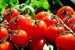 Продленная культура томатов. Помидоры с грядки до октября.