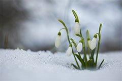Работы в саду в начале марта: советы для садовода