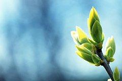 Семинары Школы садоводства от 1 марта (видео)