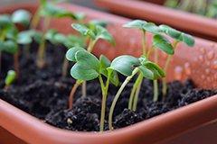 ТОП-5 удобрений для рассады овощей и цветов
