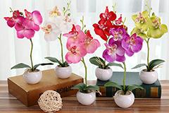 Уход за орхидеями зимой