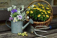 Весенний цикл семинаров по садоводству от ТД Leto