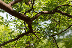 Виды обрезки дерева