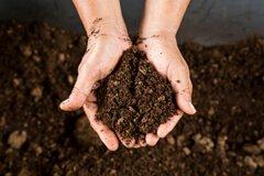 Выбор и составление почвосмеси для рассады