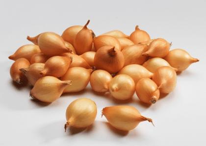 Семена лука-севка Штутти F1, 1кг, Голландия фото